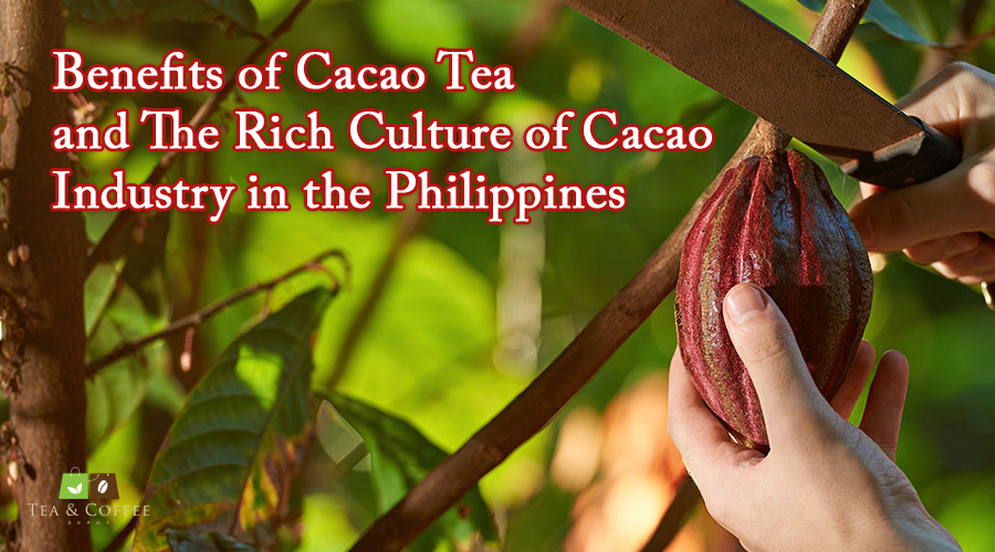benefits-of-cacao-tea-and-the-rich-culture-of-cacao-industry-in-the-philippines-609b70039174e.jpg